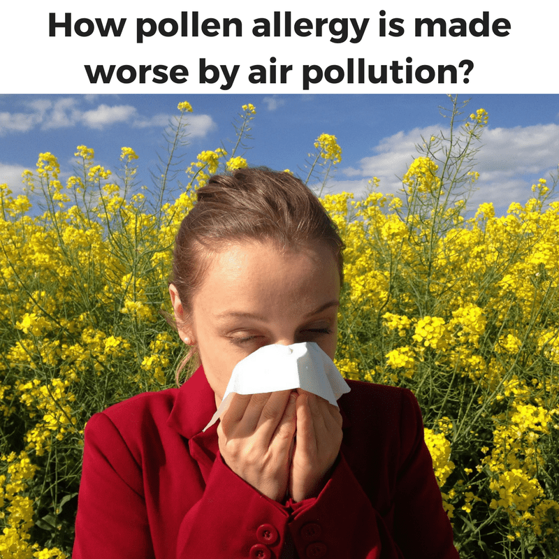 How pollen allergy is made worse by air pollution ?
